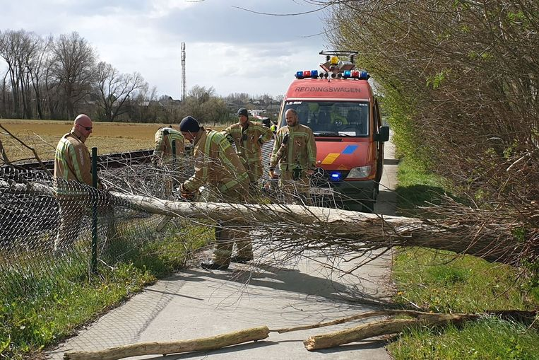 De brandweer moest een boom verzagen die op het fietspad en treinlijn L82 tussen Bambrugge en Burst belandde.
