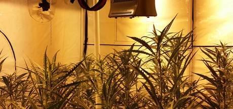 Hennepkwekerij met 412 planten geruimd in Goes