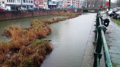 Groeneilandjes aan Nieuwewandeling gaan vroeger dan gepland weg