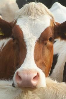 Provincie heeft ondersteuning veehouders nog niet op orde