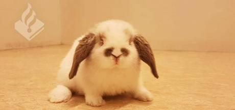 Politie zet konijn in de cel