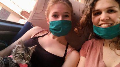 Doorbraak voor Lee: katje mag terug naar Peru, zegt ambassade nu ook officieel, rechtbank wijst vraag om euthanasie van FAVV af