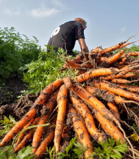 Leeg groenteschap dreigt door droogte