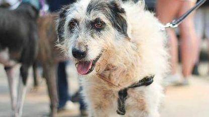 1.000 euro beloning voor wie Spaans hondje Patty vindt