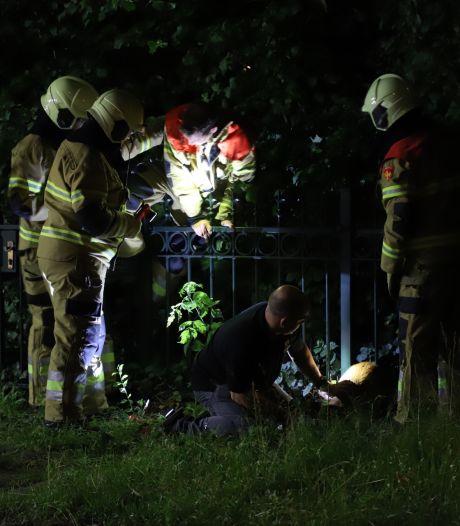 Brandweer bevrijdt ree uit hekwerk aan de Boxtelseweg in Liempde