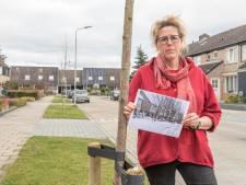 Erika is allesbehalve hroôs op Reimerswaal: gemeente kapt 8 bomen en plant er maar 4 terug