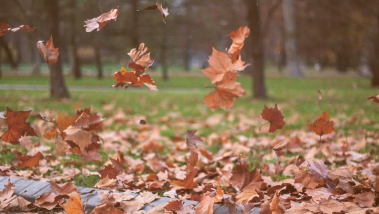 Hoor De Wind Waait Door De Bomen De Morgen