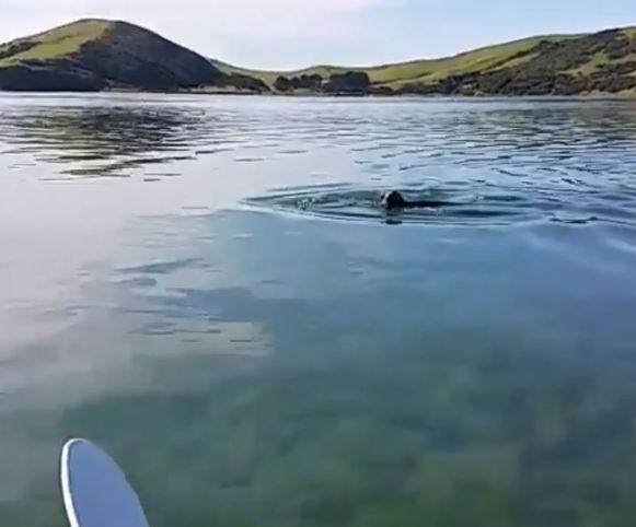 Een spelende zeehond op een beeld dat vanaf het stickje afkomstig is.