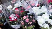 Gezocht: plantjesverkopers voor Kom op tegen Kanker