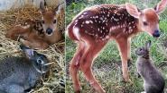 Bambi en Stampertje bestaan echt en ze zijn beste vrienden