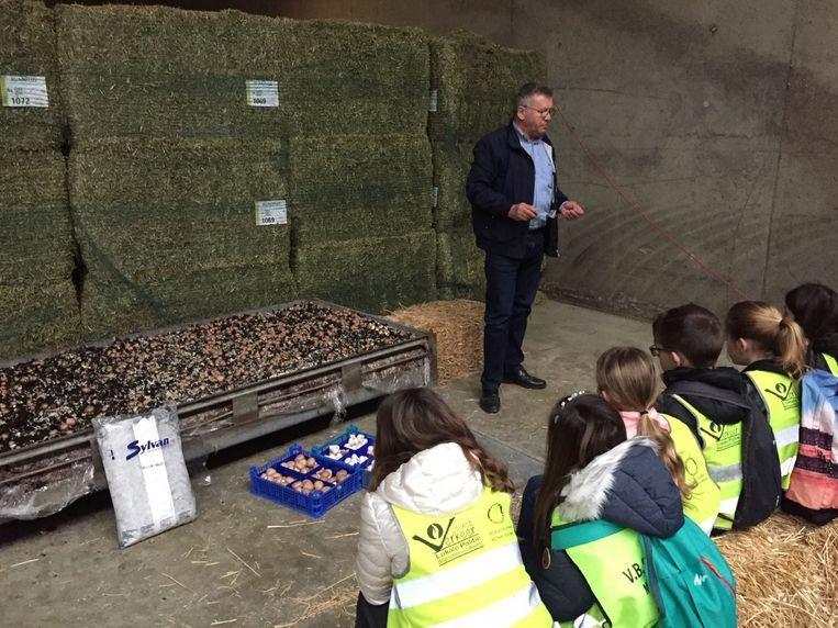 110 scholieren uit Riemst krijgen uitleg over de teelt van champignons in de grotten.