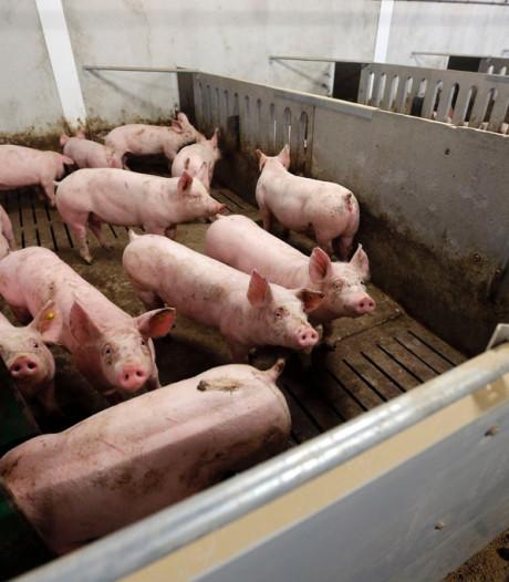 Stallenbeleid in Brabant: De boer kijkt de kat uit de boom