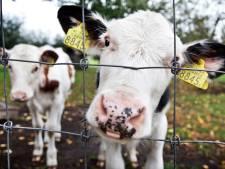 De boer is niet zo gebekt, maar dat willen ze met Boert Bewust in het Vechtdal veranderen