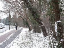 Tweede poging bomenkap westelijke rondweg op 1 februari