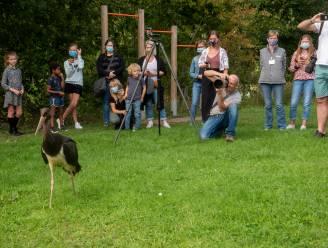 """Zeldzame zwarte ooievaar vliegt terug naar de vrijheid in Scheldemeersen: """"Eerste maal dat we er zo eentje kunnen loslaten in de vrije natuur"""""""