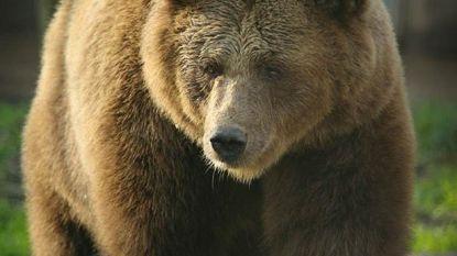Dierenopvangcentrum De Zonnegloed treurt om overleden beer Elena