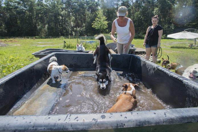 Voor de honden staat een verkoelend bad klaar bij Dog Wolluk.