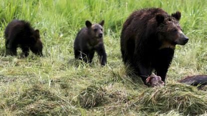 Vader en zoon schieten moederbeer met welpen neer: maanden later duiken camerabeelden op
