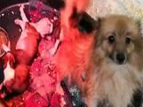 Italiaanse politie rolt grote puppyhandel uit Oost-Europa op