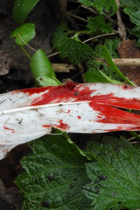 Loslopende honden bijten zwaan dood in park