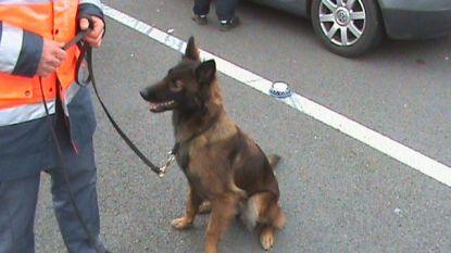 Hondenbrigade douane onderschepte in 2016 11 kilogram drugs en 100.000 euro