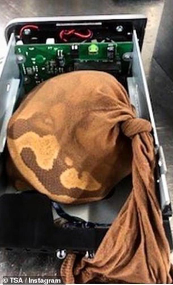 Een slang in een zak in een externe harde schijf