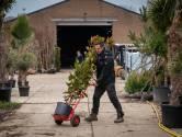 Treurwilgen, palmbomen en Japanse sierkersen vliegen de webshop van kweker Anton uit
