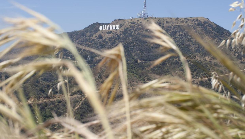 Het bekende 'Hollywood-sign' in Los Angeles, Californië. Beeld anp