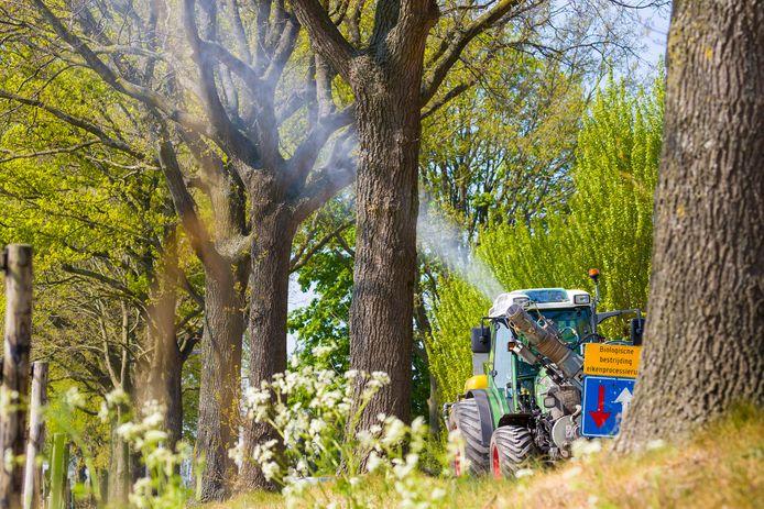 Ook Oisterwijk zette het bestrijdingsmiddel Xentari in om de eikenprocessierupsen te bestrijden.