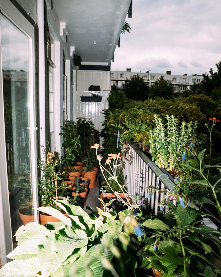Planten Voor Balkon.Een Balkon Met 55 Personages Van Zorgenkindjes Tot Stoere