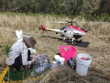 Des drones pour restaurer l'habitat des koalas après les incendies en Australie