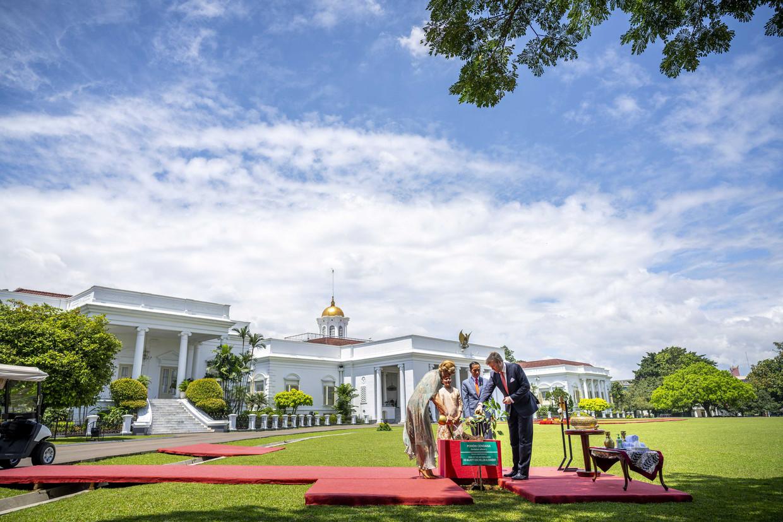 Koning Willem-Alexander en koningin Máxima worden verwelkomd op paleis Bogor door president Joko Widodo en zijn echtgenote Iriana, en planten een boom in de tuin van het presidentieel paleis. Beeld ANP