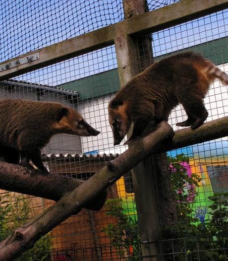 Dierenpark Marknesse Meerzoo mag exotische dieren opvangen