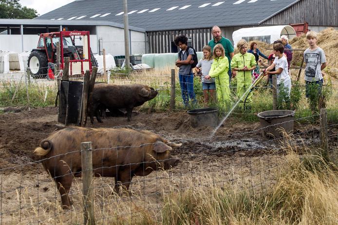 Lessen op de boerderij: ze bestaan onder meer uit modder maken voor de varkens.