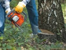 Voorlopig geen kap voor eeuwenoude boom in Den Hout