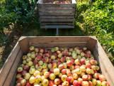 CORONABULLETIN #84: Vrienden zien op school, raken  nu ook de fruitmedewerkers besmet?
