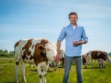Koeien van Albert uit Oene verslinden de wilgjes van Staatsbosbeheer langs IJssel - en dat is (bio)logisch
