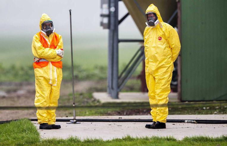 Leden van een ruimploeg treffen voorbereidingen bij het legpluimveebedrijf in Zoeterwoude waar vogelgriep is vastgesteld. Beeld anp