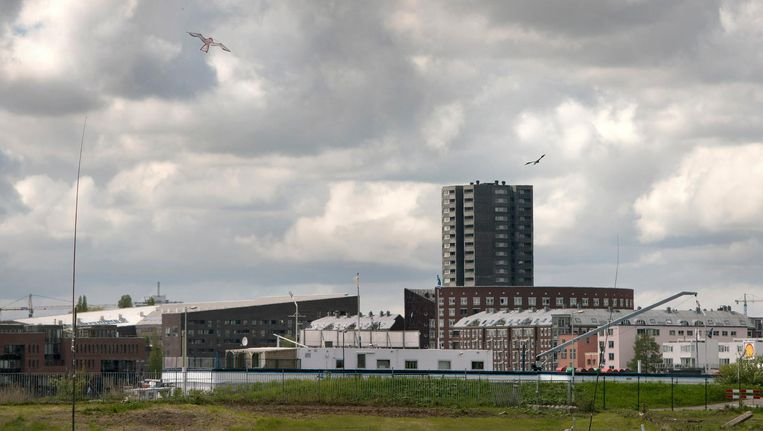 De vogelverschrikkers in actie boven de toekomstige Sluisbuurt op Zeeburgereiland Beeld Elmer van der Marel