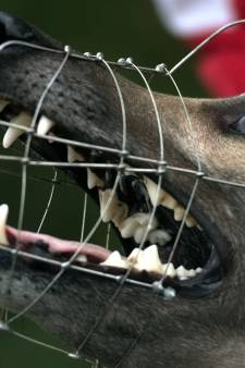 Bijtende honden in Tholen voortaan sneller verplicht aan de muilkorf