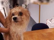Politie Gouda zoekt baasje gevonden hond