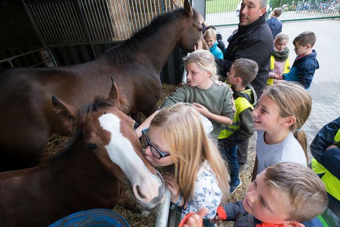 Deze paarden op Hoeve De Bartvelden kregen zoentjes en knuffels van de leerlingen.