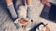 Terecht of van de pot gerukt? Italiaanse rechter kent betaald verlof toe om voor zieke hond te zorgen