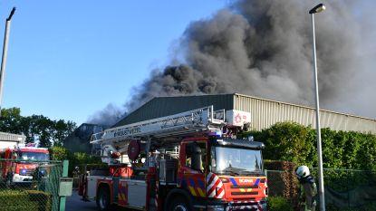 Brandweer laat loods Oud Papier Michel in Kalmthout gecontroleerd uitbranden