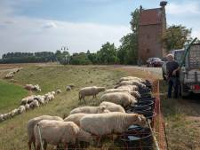 Extra water voor de schapen