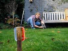 Hoeveel egeltjes lopen er door uw tuin in Eindhoven?