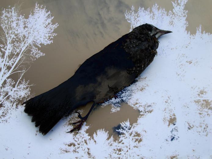 Vogelopvang Utrecht sluit zondag haar deuren vanwege financiële nood. Tot die tijd worden gewonde vogels opgevangen in Vogelopvang Soest, maar die zit al overvol.