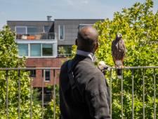"""Ontsnapte woestijnbuizerd na twee weken gevangen op terras van Gents appartement: """"Minnie herkende ons meteen"""""""