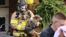 Meer dan 100 (!) honden gered uit huis van vrouw met verzamelwoede
