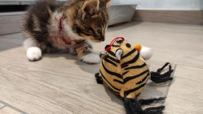 Wie schenkt toegetakeld katje nieuwe thuis?